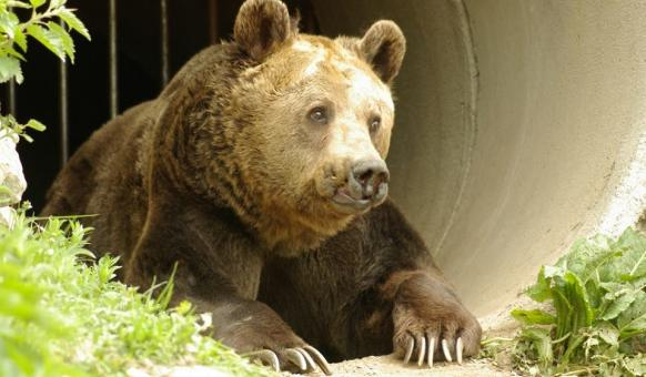 Парк за танцуващи мечки, Белица, мечка, Природни паркове, Четири лапи