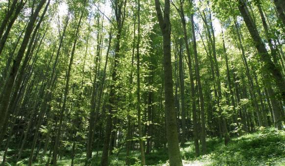 Парки, Природный парк «Беласица»
